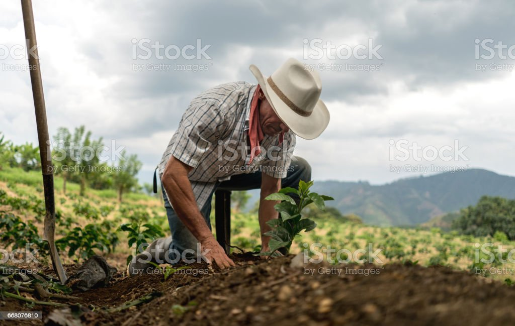 Man sowing the land at a farm - foto stock