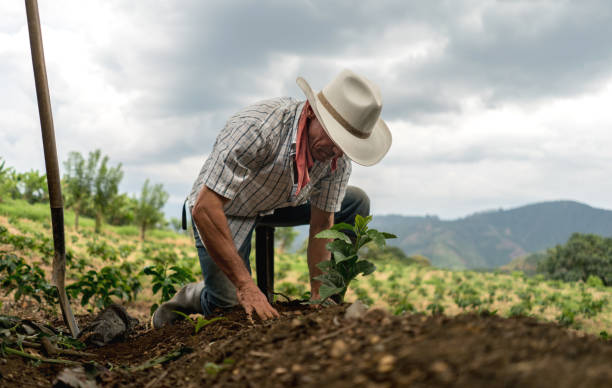 Man sowing the land at a farm stock photo