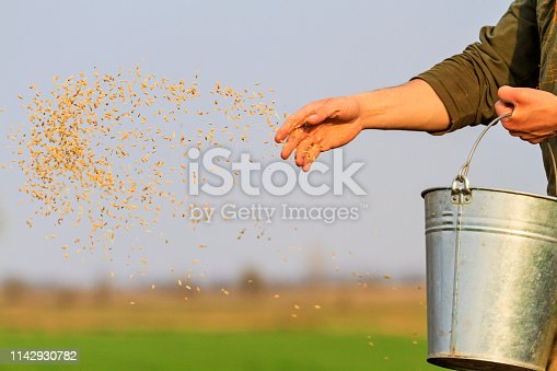 man sows grain throwing it on the ground, field work, agriculture