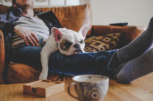 Foto de Homem Que Gasta Uma Tarde Preguiçosa Com Seu Cão Um Buldogue Francês e mais fotos de stock de Abraçar