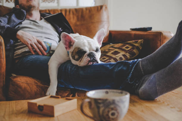 man spending a lazy afternoon with his dog, a french bulldog - sloth stock pictures, royalty-free photos & images