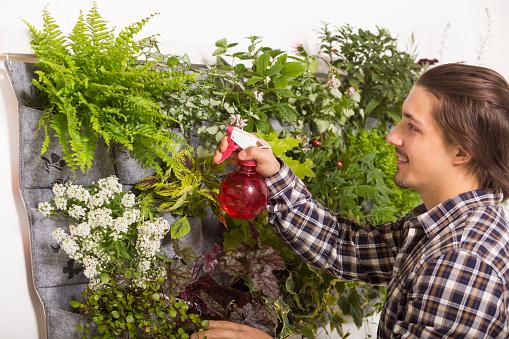 Man Spraying His Vertical Garden Stock Photo - Download Image Now