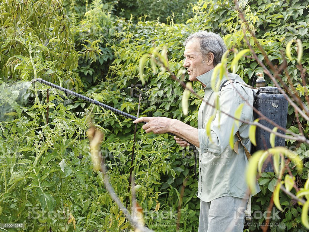 man spraying of pesticide on country garden stock photo