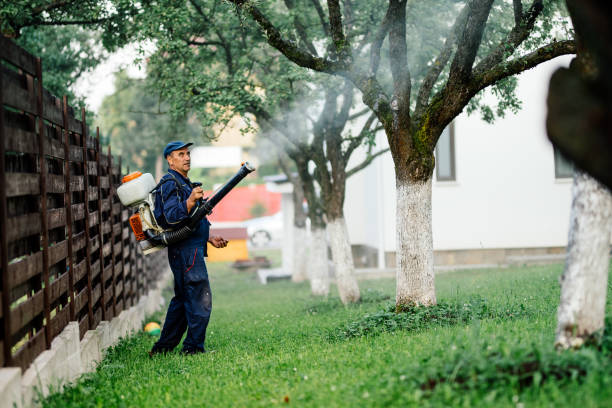 Man spraying toxic pesticides and herbicides in fruit orchard stock photo