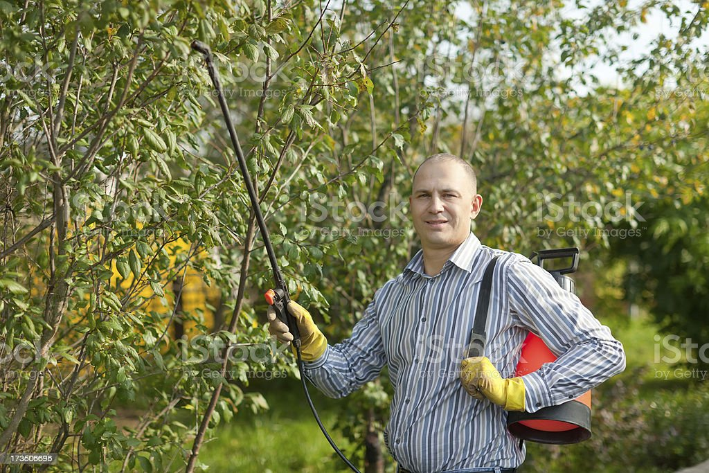 Man spraying tree plant royalty-free stock photo