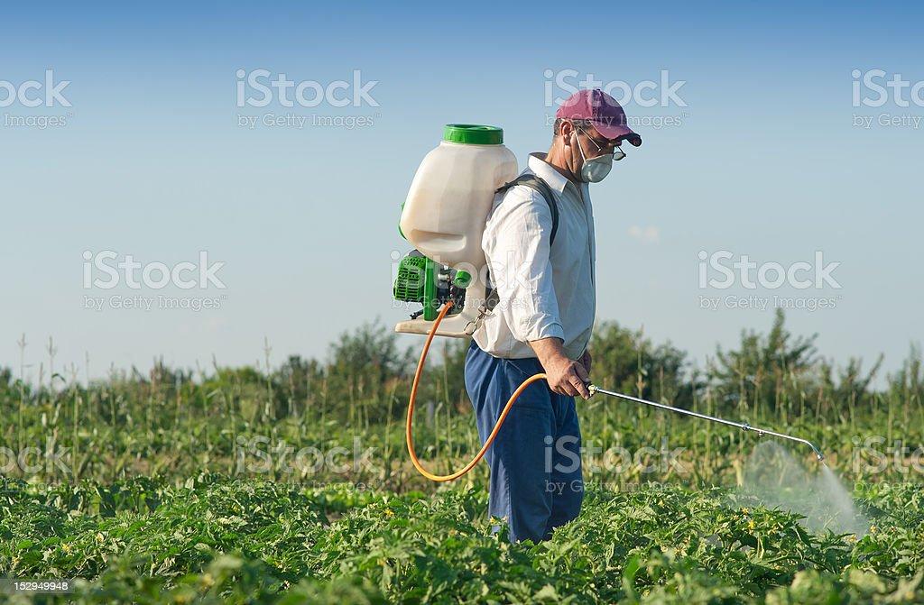 Man spraying vegetables royalty-free stock photo