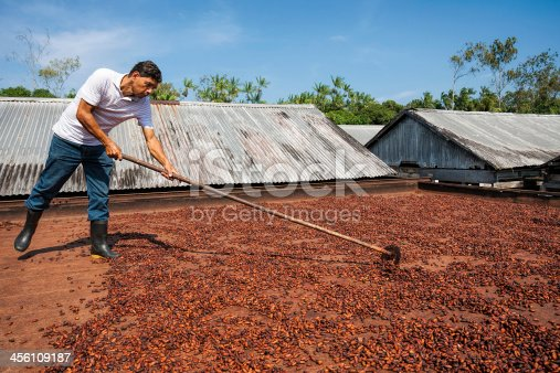 A man with a wooden rake, is spreading cocoa beans on a wooden platform, where beans are left to dry under the Brazilian sun.