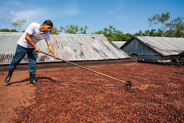 남자 분산 코코아 빈의 플랫폼 - 부잔교 뉴스 사진 이미지
