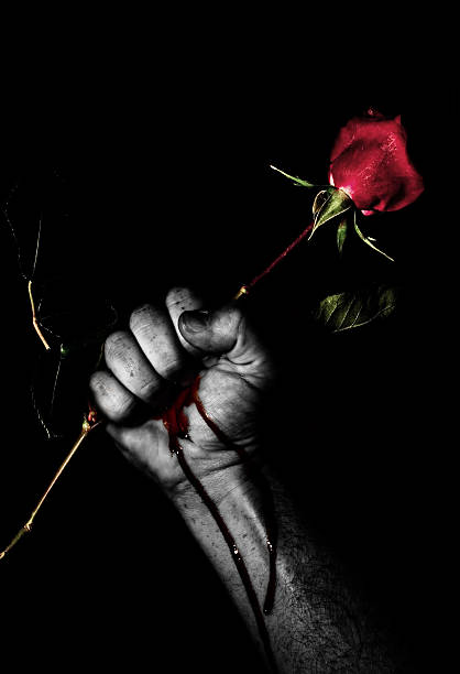 man squeezing rose thorns and bleeding, low key - thorn stock photos and pictures