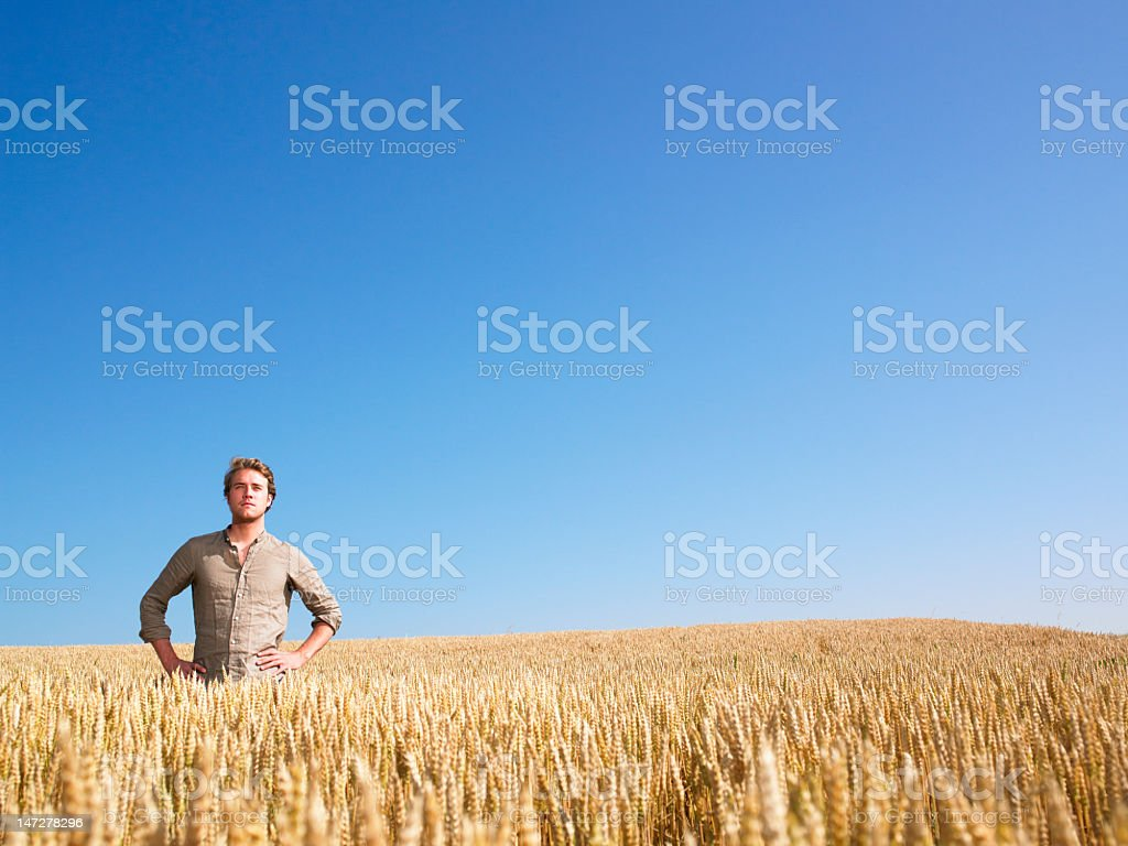 A man standing in a wheat field by himself  royalty-free stock photo