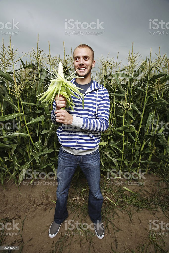 Man Standing in Corn Field royalty-free stock photo
