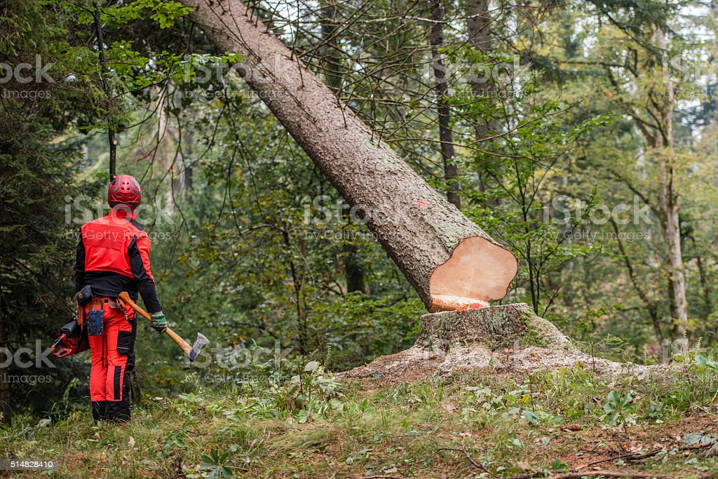 Man standing in forest stock photo
