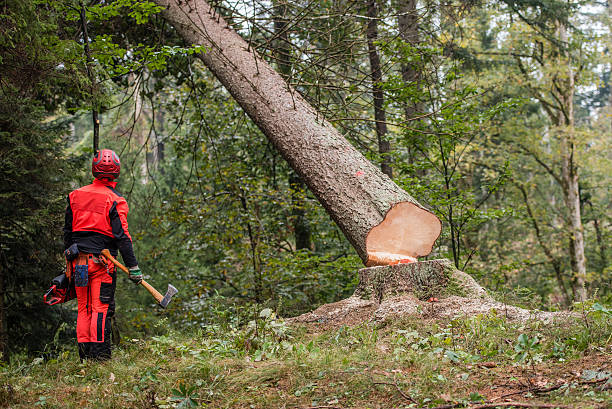Man standing in forest Man wearing protective workwear and standing in forest, tree trunk falling. deforestation stock pictures, royalty-free photos & images