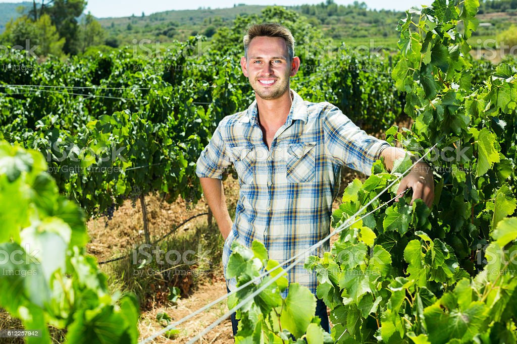 man standing in grapes tree yard stock photo