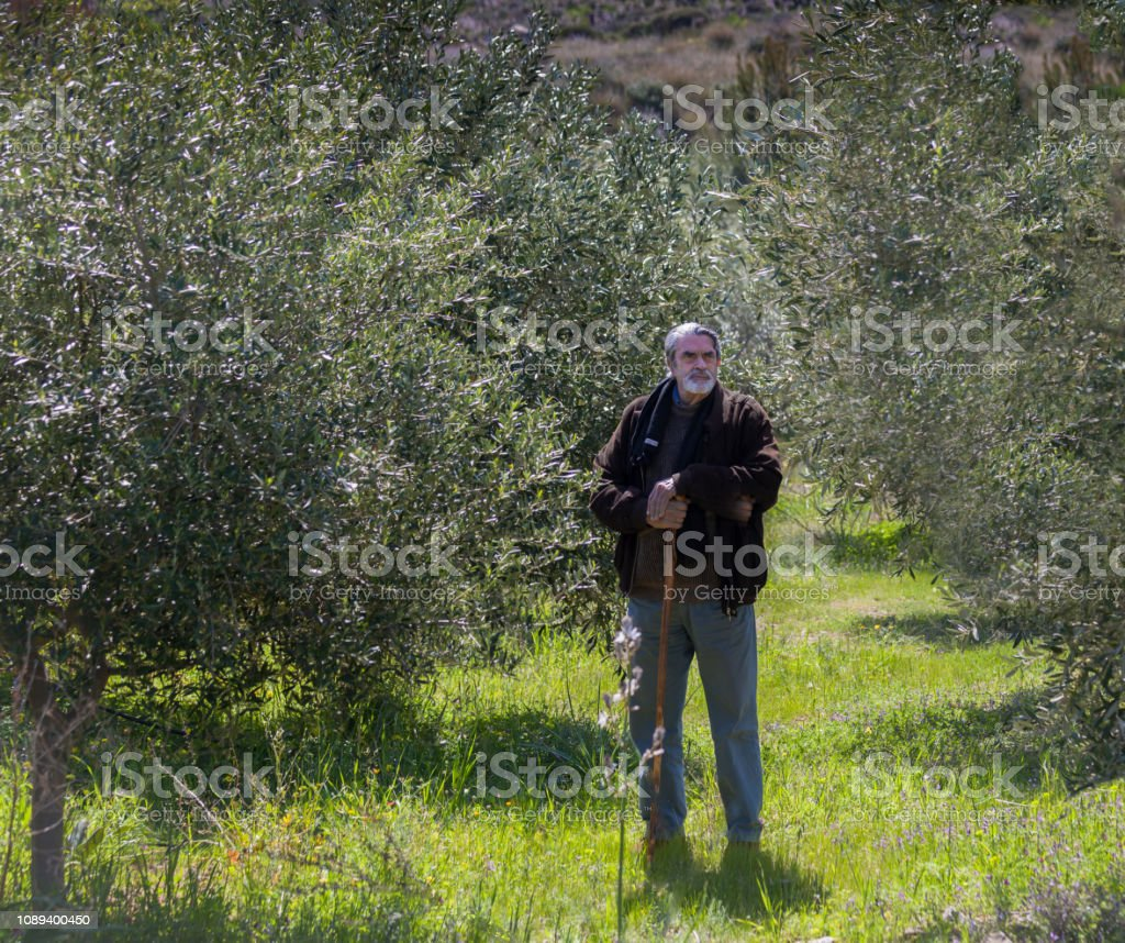 Man Standing In Olive Grove. Isolated. stock photo