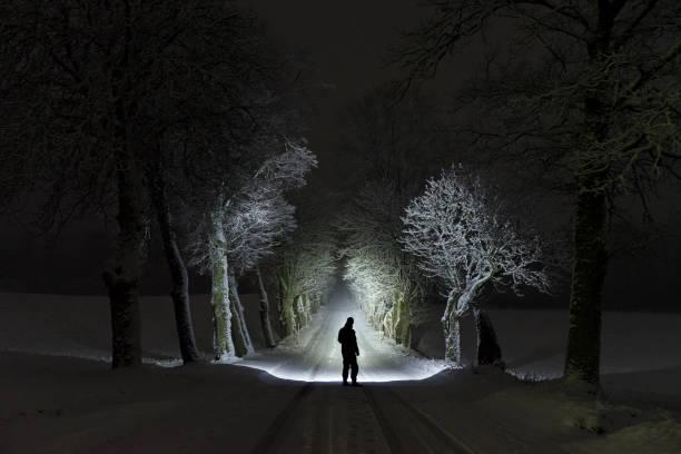 Homem de pé, ao ar livre, à noite, no beco de árvore brilhando com lanterna na paisagem de inverno Sueco - foto de acervo