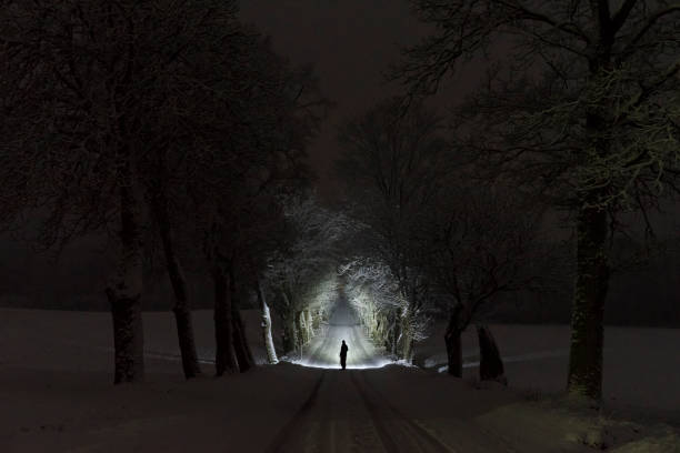 Man standing outdoors at night in tree alley shining with flashlight in Swedish winter landscape stock photo