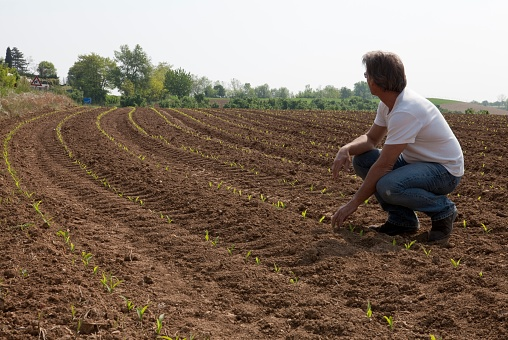 Man stands in freshly planted corn field, looks out, Piedmont, Italy