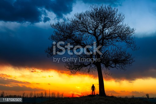 A man stands under a big tree at sunset