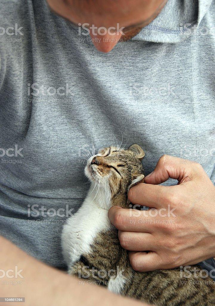 man stroking a kitten royalty-free stock photo