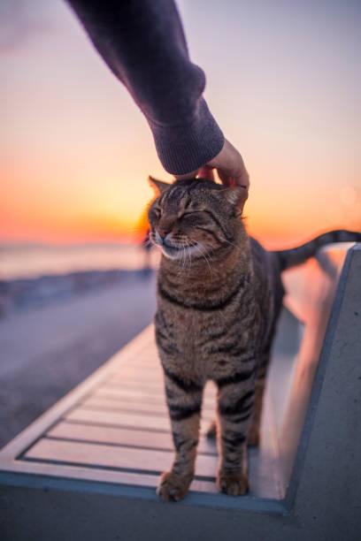 Mann streicheln Katzenkopf, der happy cat – Foto