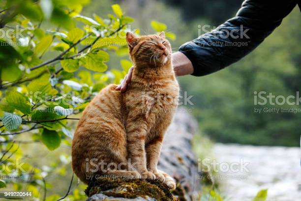 Man stroking cats head picture id949220544?b=1&k=6&m=949220544&s=612x612&h=jrfcwg4fbp7p2hsmkh d4irop9n1oqff3fv 7cumbae=