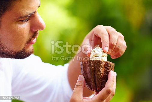 istock man taking out beans from cutted cocoa pod 858426078