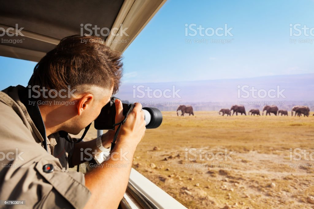 Man taking photo of elephants at African savannah stock photo