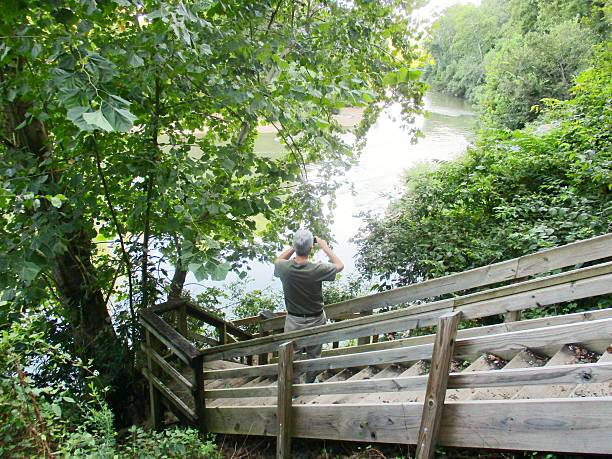 Man Taking Picture of River from Wooden Stairway stock photo