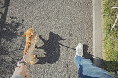 犬の散歩を取る人。