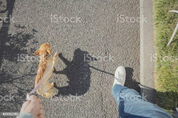 Man taking the dog for a walk picture id943352062?b=1&k=6&m=943352062&s=612x612&h=orlimq9imhqptt2pqftgen14dtvhj6dpmadaqkafbew=