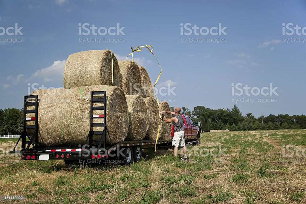 Man Throwing Tie-Down Strap Over Hay Bales on Trailer royalty-free stock photo