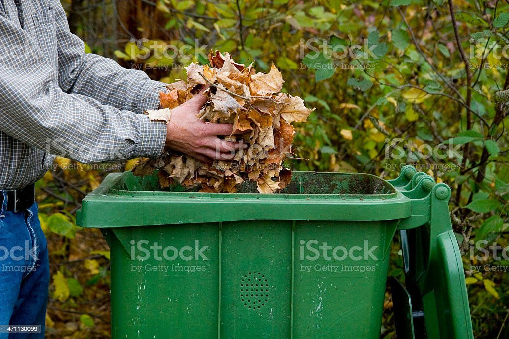 Man tossing leaves into a green receptacle outside stock photo