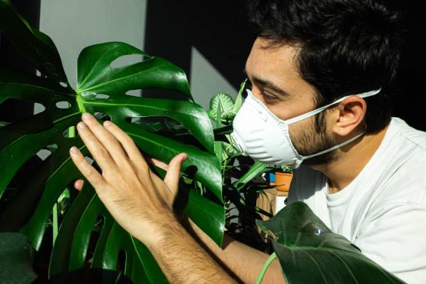 Mann berührt monstera deliciosa mit seiner medizinischen Maske – Foto