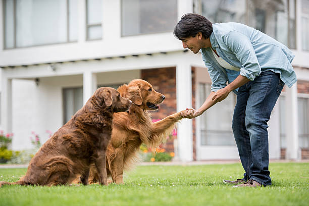 Man training a couple of dogs Latin American man training a couple of dogs outdoors making them give him their hand - lifestyle animal hand stock pictures, royalty-free photos & images