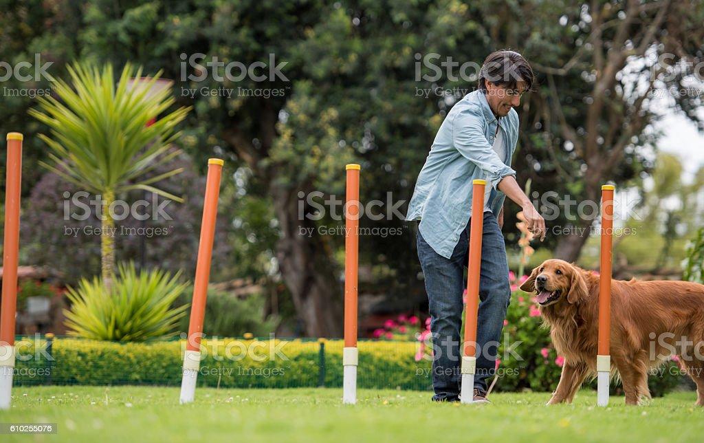 Man training a dog stock photo