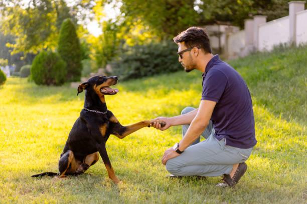 homme, formation d'un chien - dressage photos et images de collection