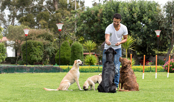 Man training dogs at the park stock photo