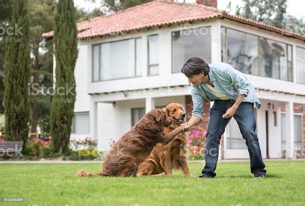 Man training dogs stock photo