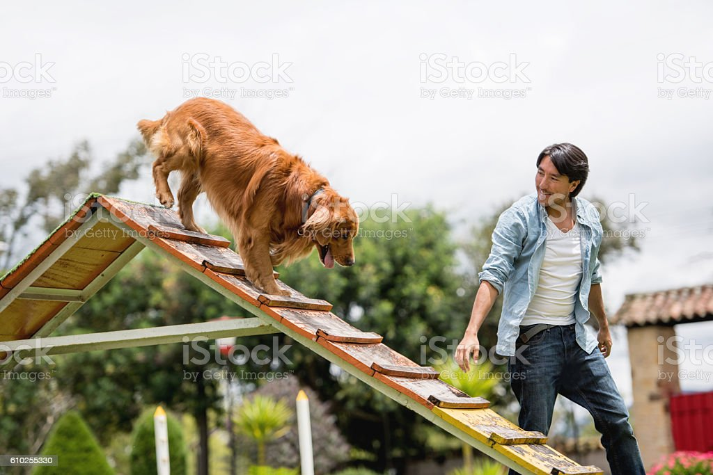 Man training his dog at the park stock photo