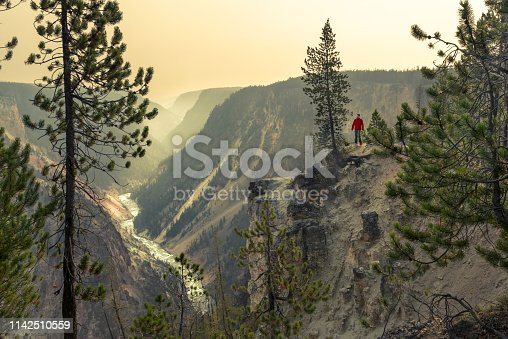 Man standing by a tree looking from above at the Grand Canyon of the Yellowstone river. Early morning scene with the river and smoky canyon on the background.