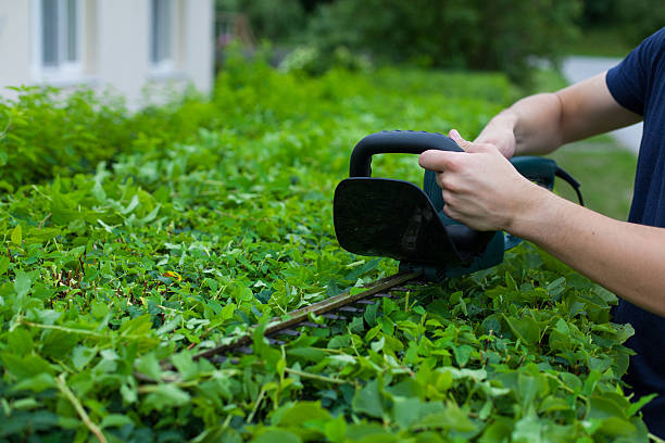 Man trimming a hedge next to a house – Foto