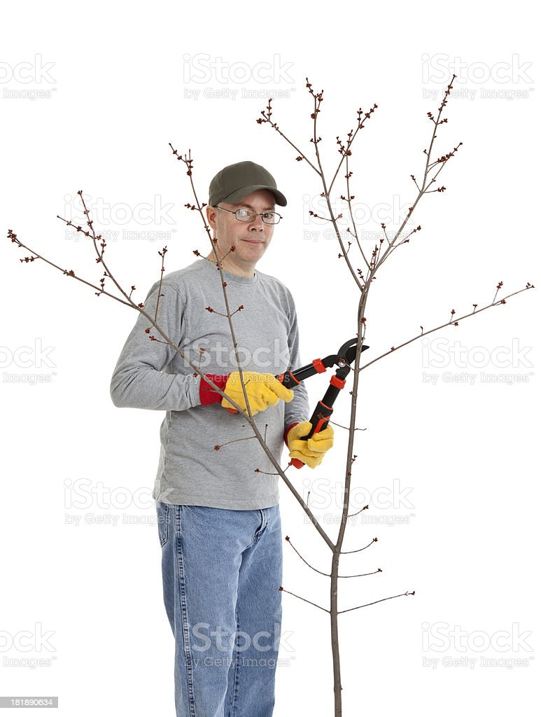 Man Trimming a Tree royalty-free stock photo