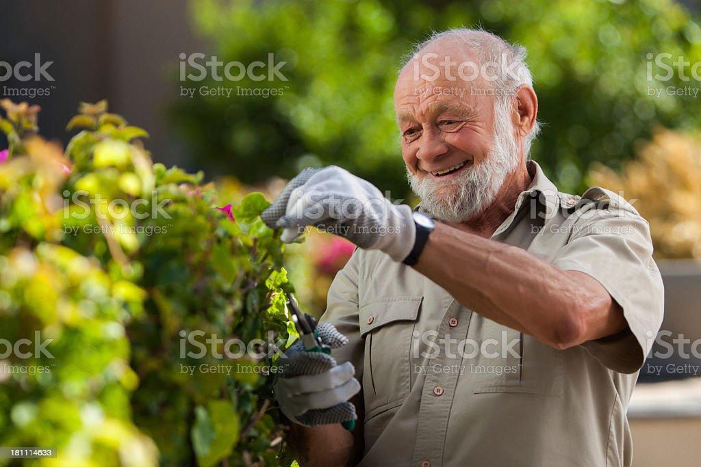 Man Trimming Bushes royalty-free stock photo