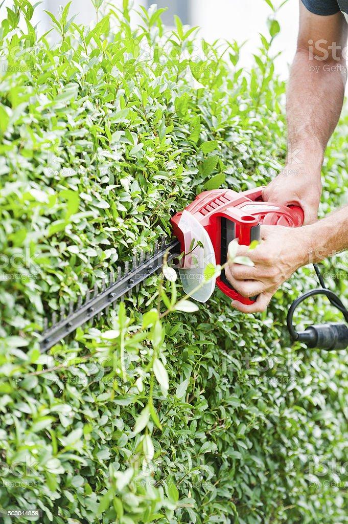Man trimming hedge stock photo