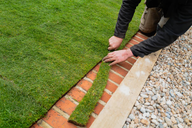 A man trimming newly laid natural turf along the brick mowing strip at the edge of the lawn stock photo