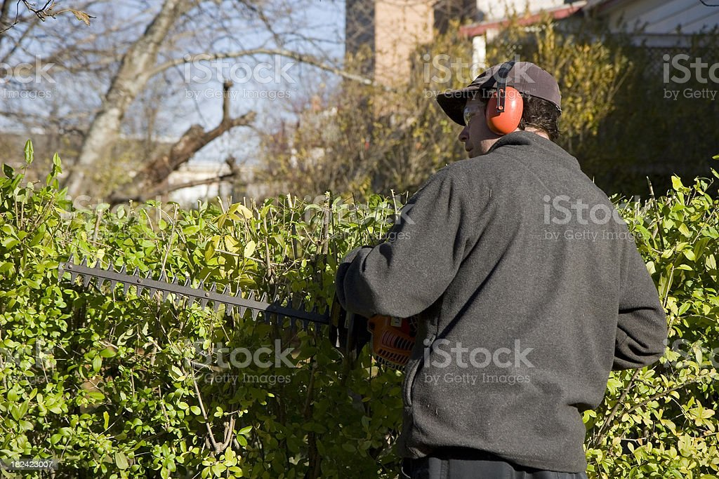 Man Trims Hedge Wearing Safety Equipment stock photo