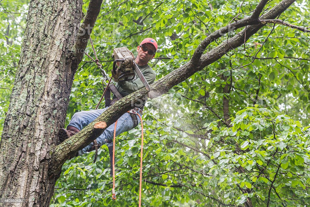Man Using Chainsaw To Cut Limb From Dead Tree Stock Photo
