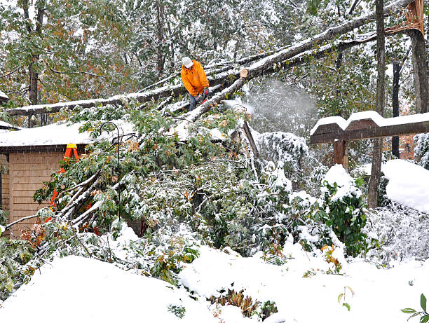 Man using chainsaw to remove fallen tree from house stock photo