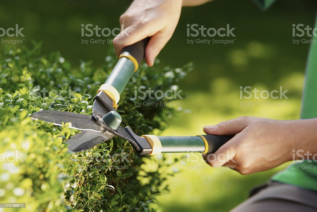 Man using hedge clippers royalty-free stock photo